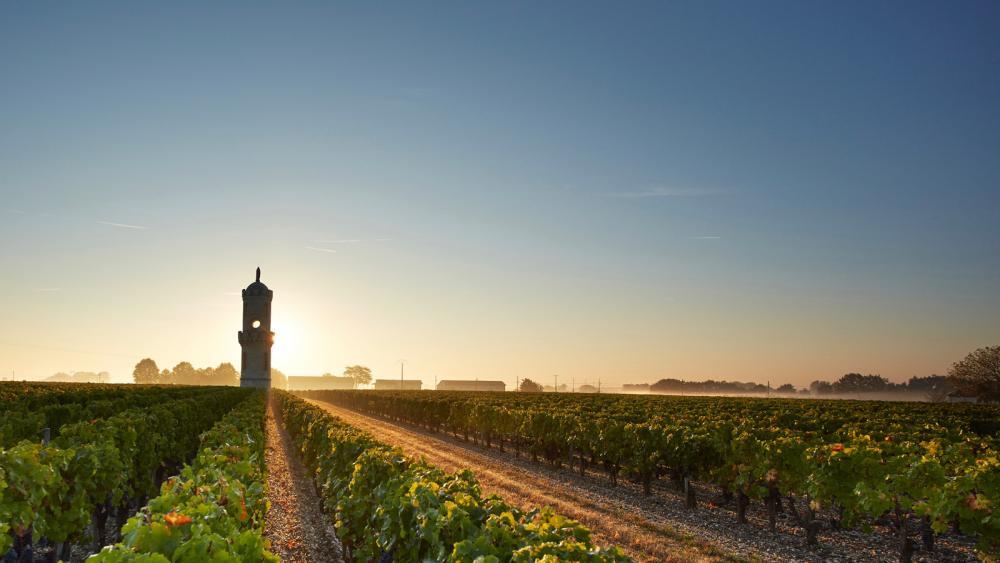 Rượu vang Bordeaux – Chuẩn mực của sự so sánh